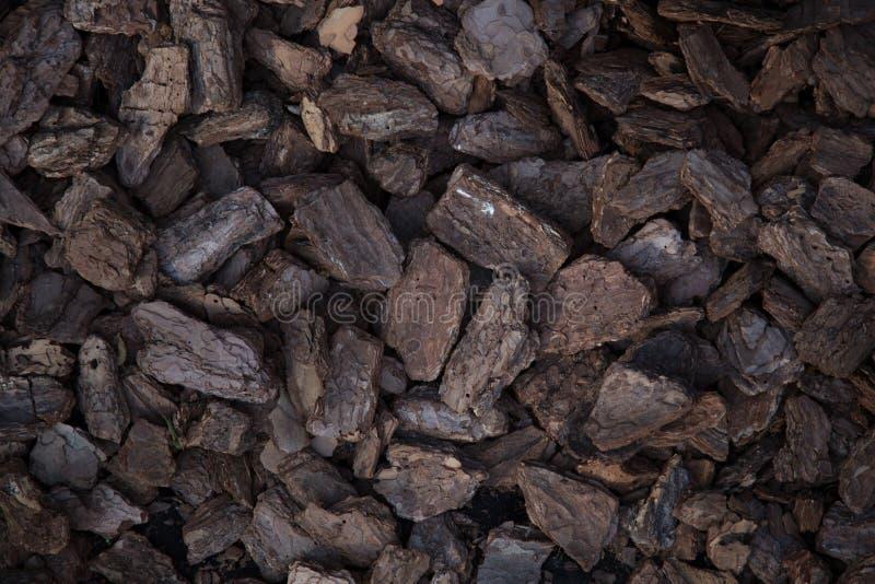 Les morceaux de Brown de ` s de pin écorcent au sol image stock