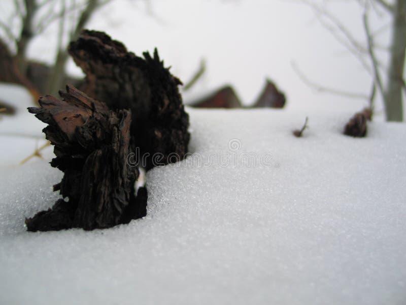 Les Morts De L Hiver Photos stock