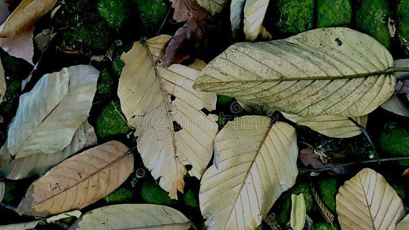 Les morts laissent le mensonge sur le plancher tropical de forêt photographie stock