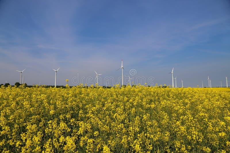 Les moteurs de vent dans une graine de colza mettent en place en Allemagne photos libres de droits