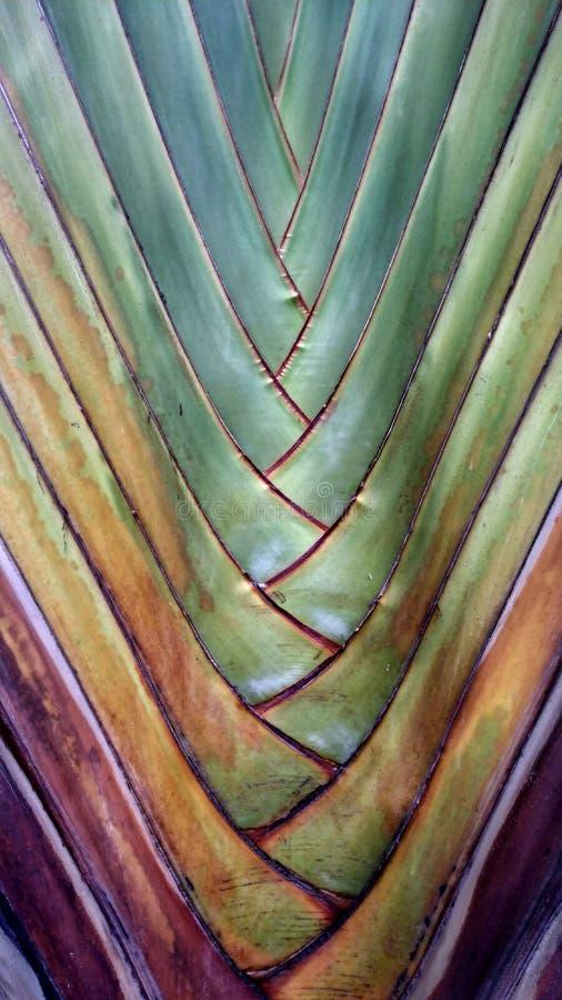 Les motifs d'un arbre extrêmement beau photos libres de droits