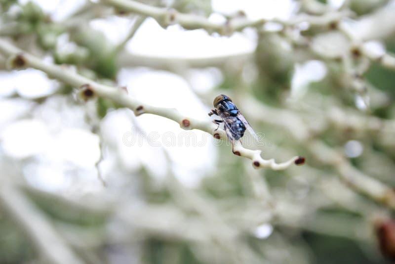 Les mouches de coup, carcasses, genou vole image libre de droits