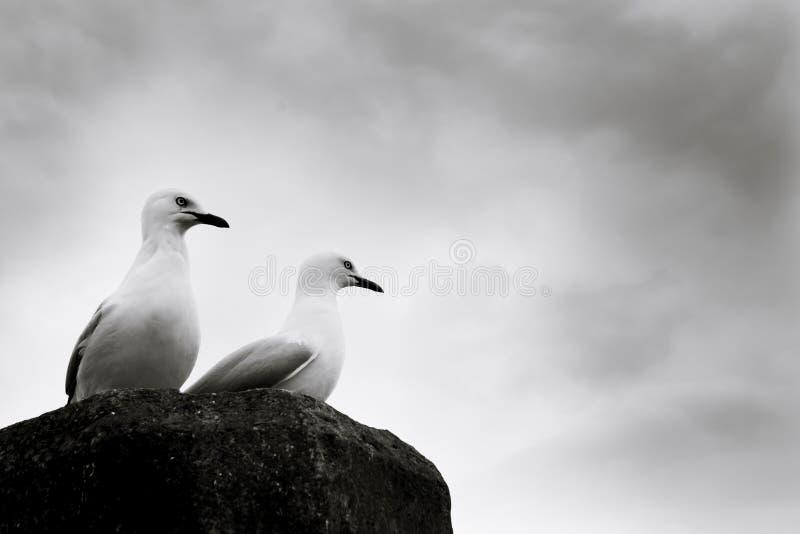Les mouettes étaient perché sur un courrier à un quai dans Whitianga, Nouvelle-Zélande image stock
