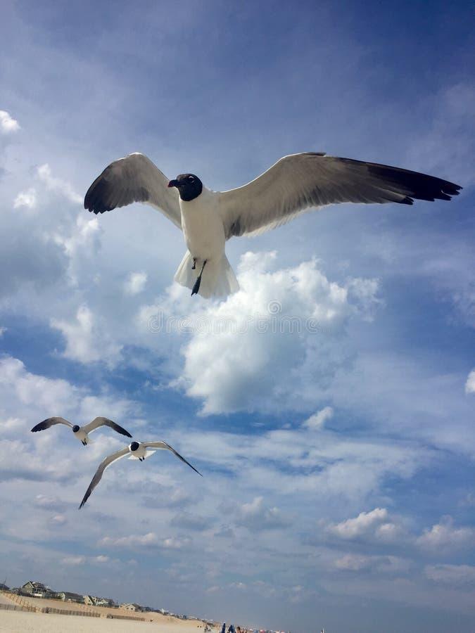 Les mouettes montent par le bord de la mer photo libre de droits