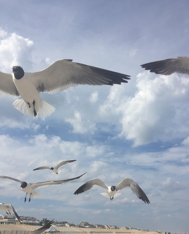 Les mouettes montent par le bord de la mer photos stock