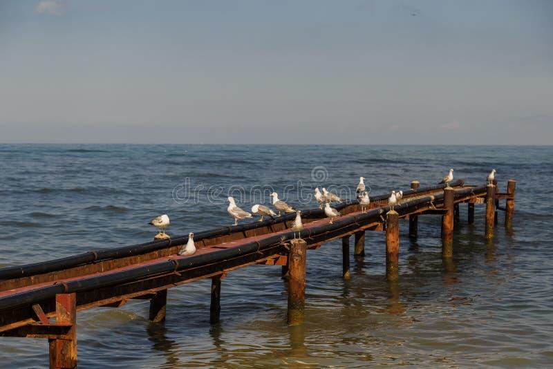 Les mouettes se reposent sur le quai qui entre dans la mer image stock