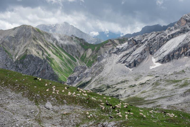 Les moutons en montagnes des Alpes en Bavière, Allemagne photo libre de droits