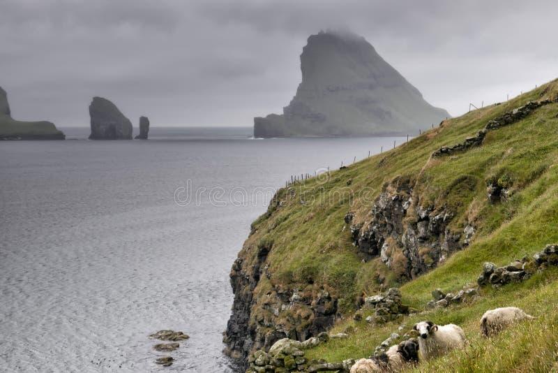 Les moutons enfoncent dans le paysage lointain d'île d'oer de faer photos libres de droits