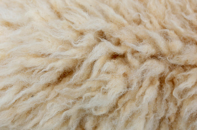 Les moutons tondent pour le fond de texture image libre de droits
