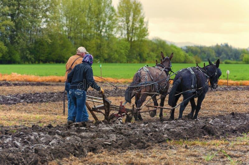 Les mules tirent une charrue guidée par un homme et une femme images libres de droits