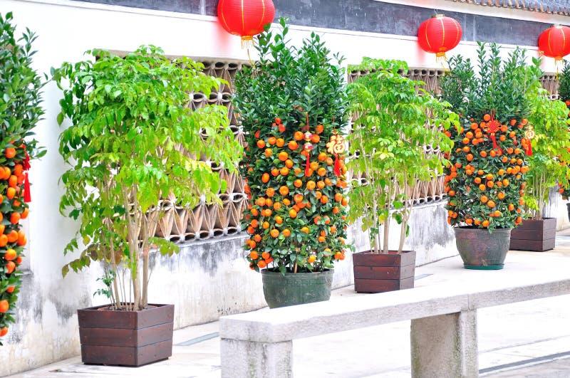 Les murs et le kumquat photos libres de droits