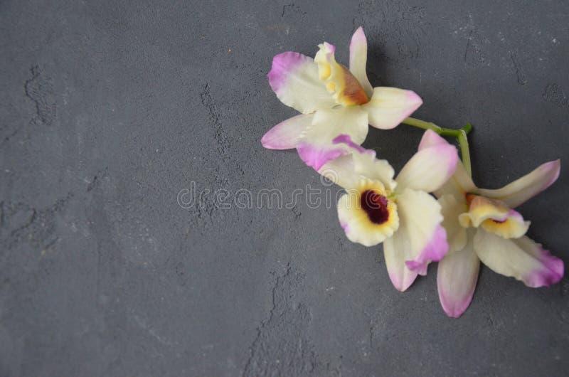 Les noix de coco avec l'orhid de feuilles en bon état fleurit, sur le fond foncé Copiez l'espace photo stock