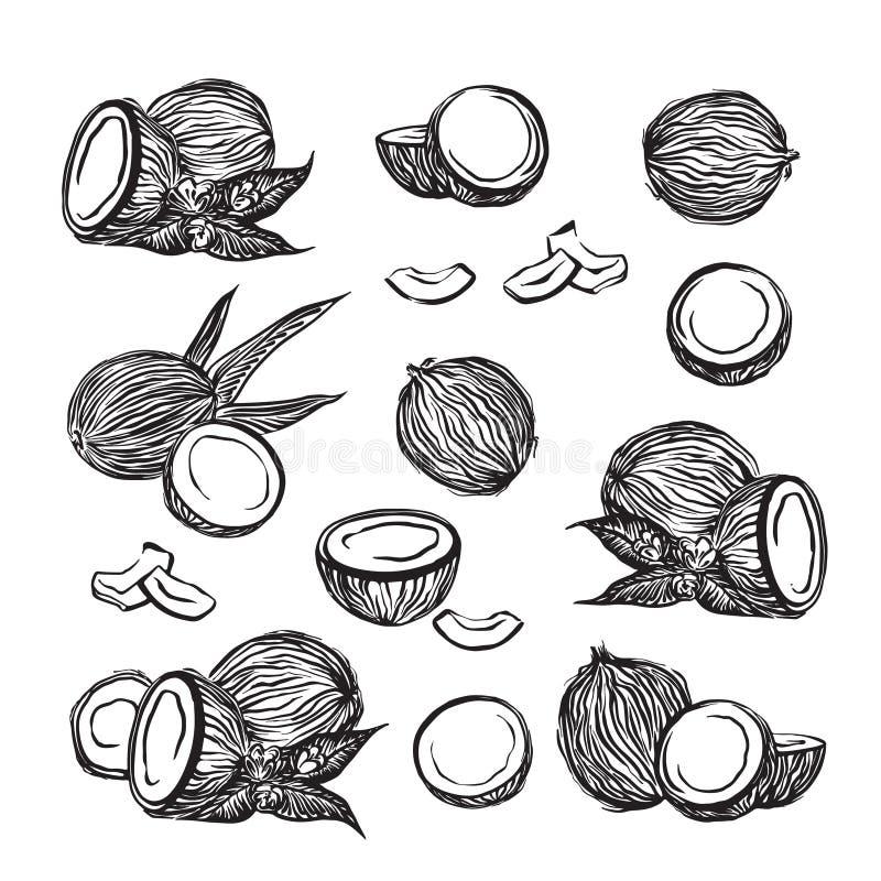 Les noix de coco tirées par la main décrivent l'ensemble de croquis Fruits de dessin à l'encre noire de Cocos de vecteur Illustra illustration stock