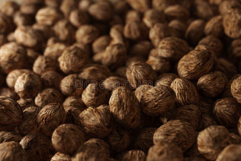 Les noix de récolte photos stock