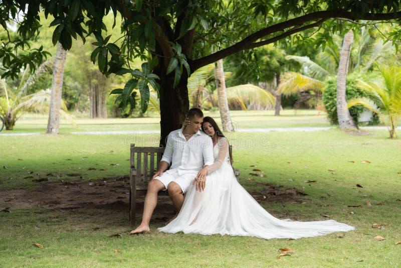 Les nouveaux mariés s'asseyent sur un vieux banc sous un arbre tropical énorme photo stock