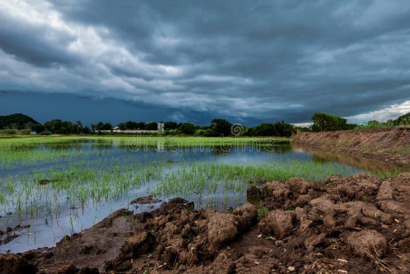 Les nuages terribles de ciel groupant la pluie en masse compacte ont commencé à tomber tard dans le riz photos libres de droits