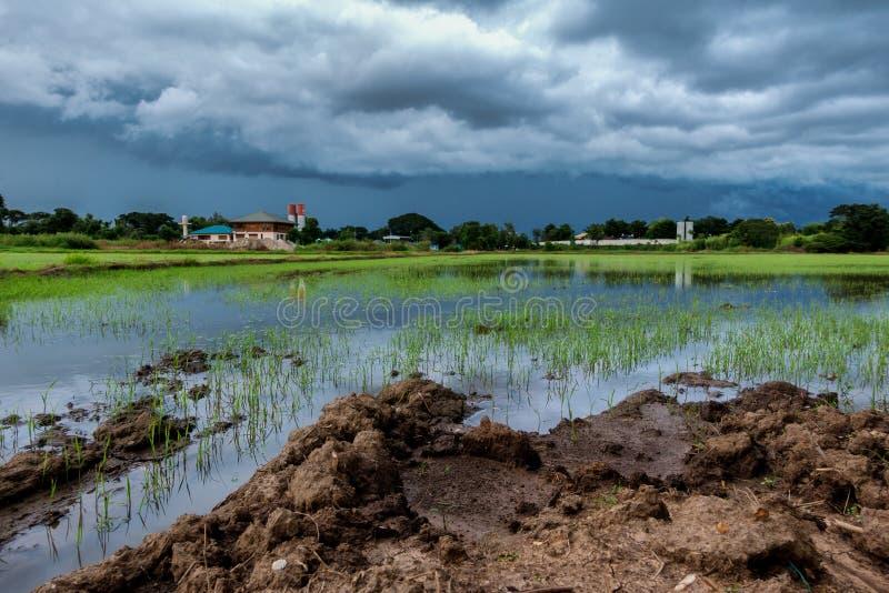 Les nuages terribles de ciel groupant la pluie en masse compacte ont commencé à tomber tard dans le riz image stock