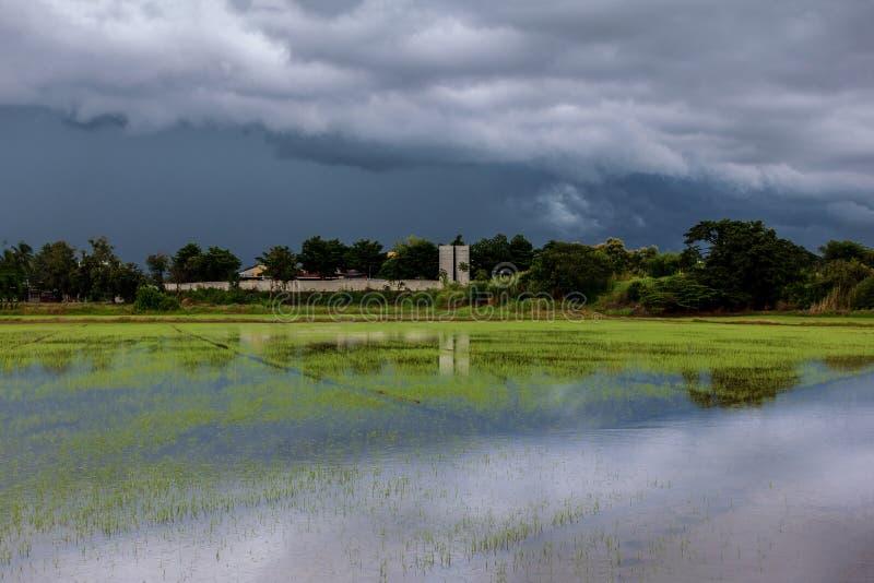 Les nuages terribles de ciel groupant la pluie en masse compacte ont commencé à tomber tard dans les rizières photographie stock
