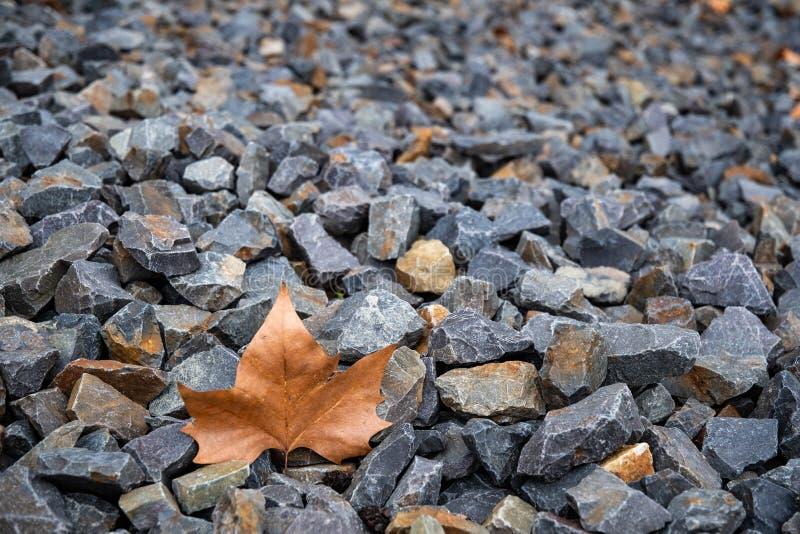 Les nuances des morceaux gris de granit gravellent la texture avec la feuille d'érable brune defocused image libre de droits