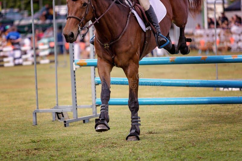 Les obstacles sautants de cheval à une exposition de pays photo stock