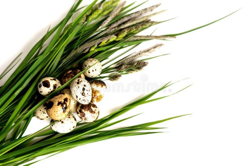 Les oeufs de caille se trouvent sur l'herbe fraîche photos libres de droits