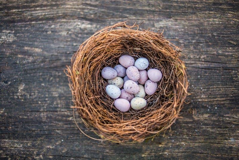 Les oeufs de pâques heureux de sucrerie de Pâques dans les oiseaux nichent images stock