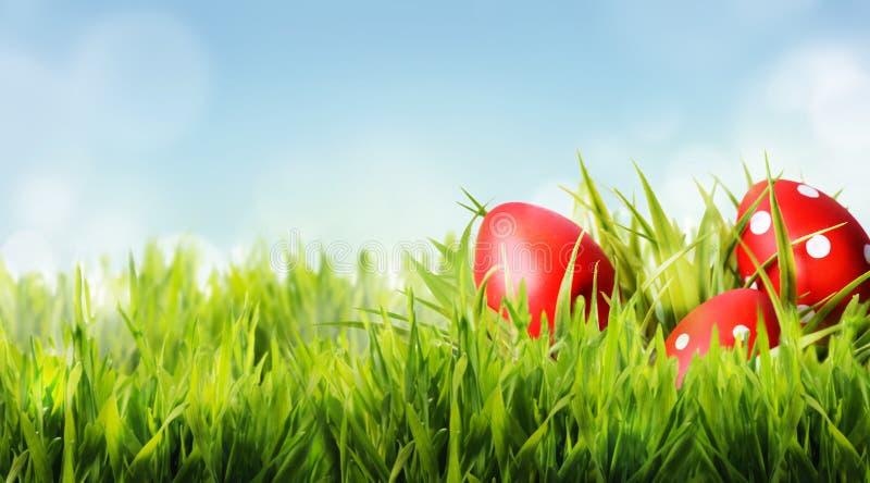Les oeufs de pâques rouges se cachent dans l'herbe verte photos stock