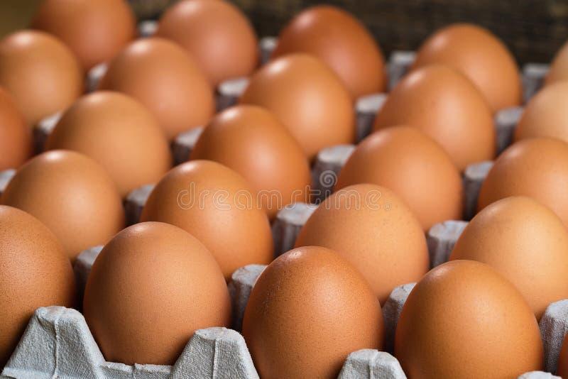 Les oeufs de poulet se trouvent sur un substrat pour des oeufs photos libres de droits