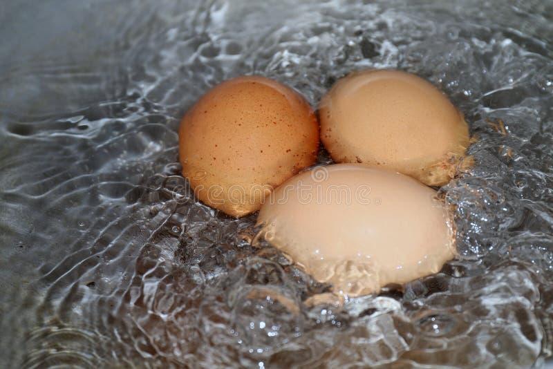 Les oeufs, oeuf à la coque dans la casserole, jaune rougeâtre d'oeufs crus en eau chaude bout faisant cuire le foyer sélectif photographie stock