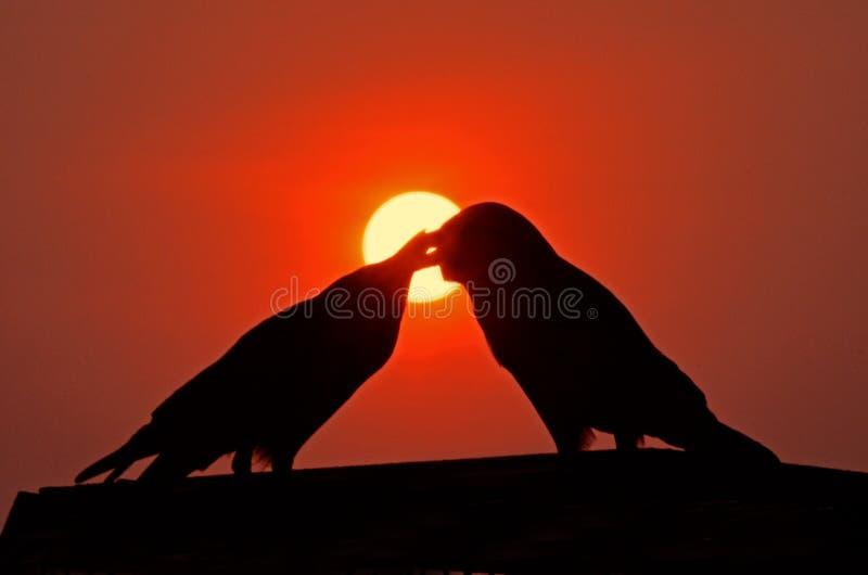 Les oiseaux d'amour silhouettent au coucher du soleil images libres de droits