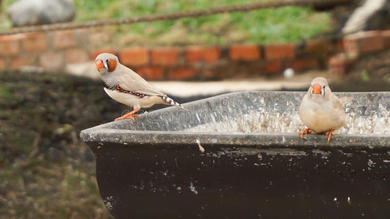 Les oiseaux d'amour sur le navire photo libre de droits