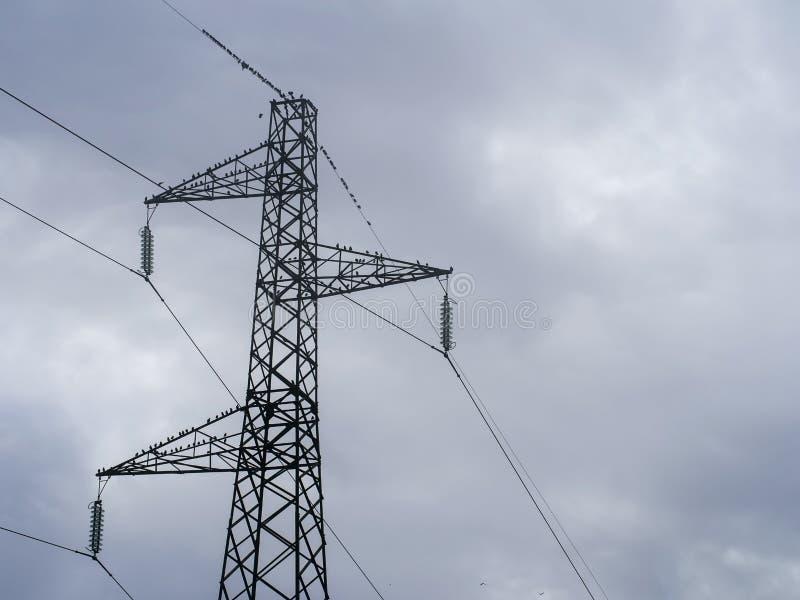 Les oiseaux migrateurs recueillent sur une ligne électrique à haute tension, pylône, en automne photos libres de droits