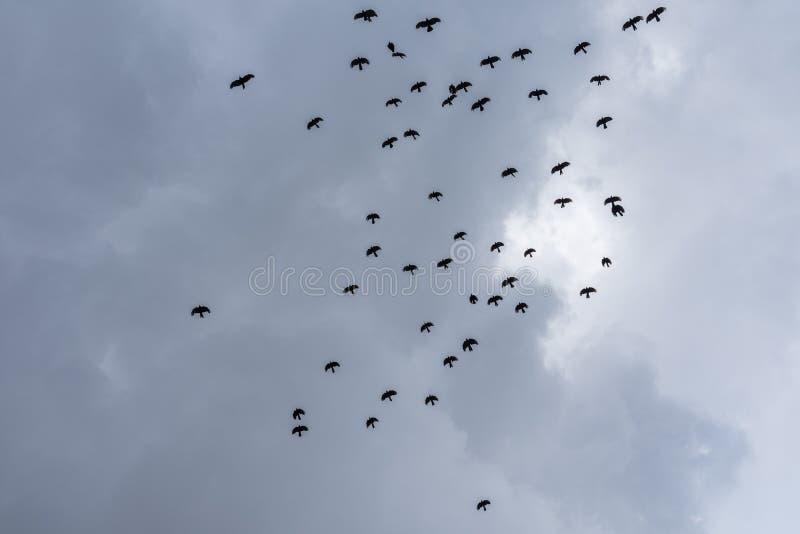 Les oiseaux noirs en vol en ciel photographie stock