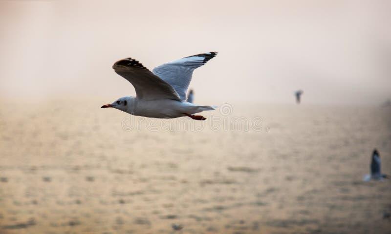 Les oiseaux restent sur le toit de temple avec le ciel photos libres de droits