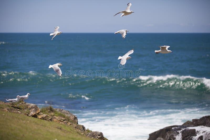 Les oiseaux s'approchent de l'océan photo libre de droits