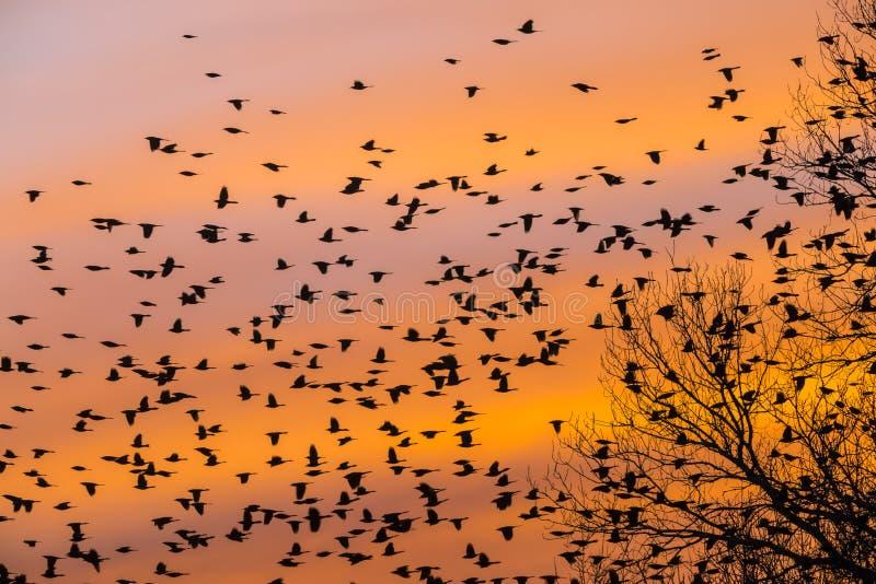 Les oiseaux se dirigent à la maison sur un coucher du soleil du sud photos stock