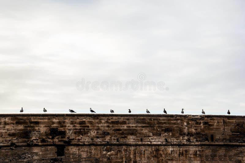 Les oiseaux se reposent sur le mur équidistant images libres de droits