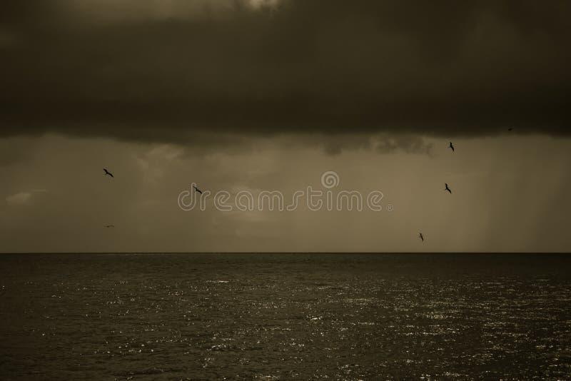 Les oiseaux volent autour et autour dans le ciel nuageux photos stock