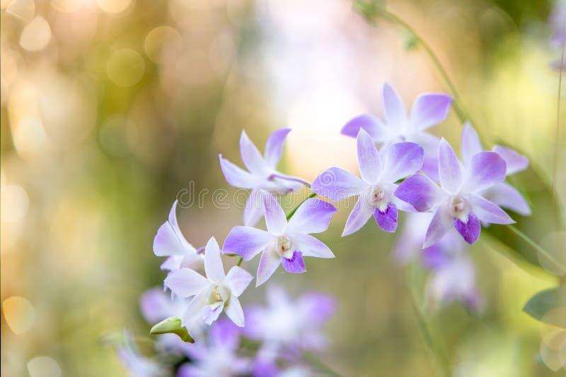 Les orchidées fleurissent avec le fond brouillé photo libre de droits