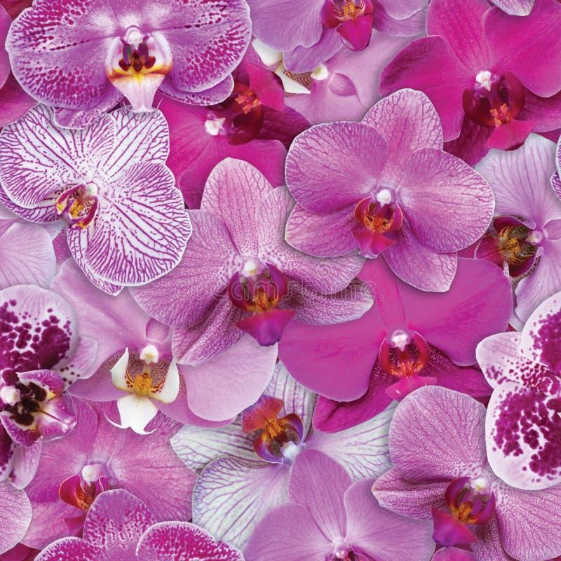 Les orchidées modèlent le fond sans couture de fleur photo stock
