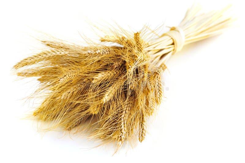 les oreilles ont isolé le blé photos stock