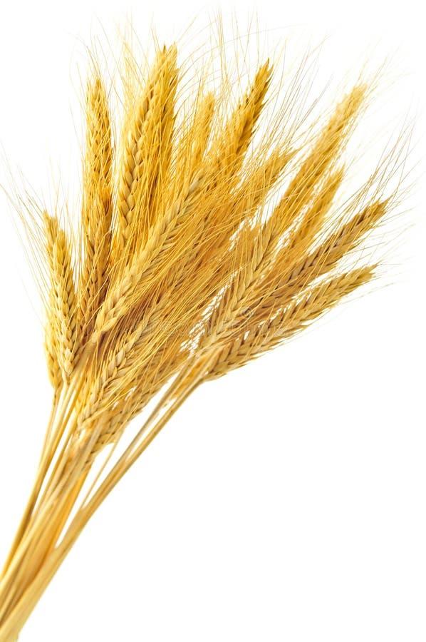 les oreilles ont isolé le blé photographie stock