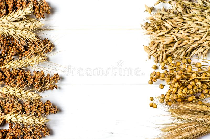 Les oreilles s?ches du bl?, de l'avoine et d'autres grains se trouvent sur un bois blanc de fond images libres de droits