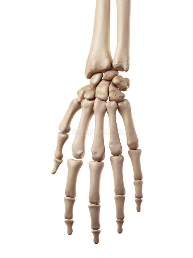 Les os de main illustration stock