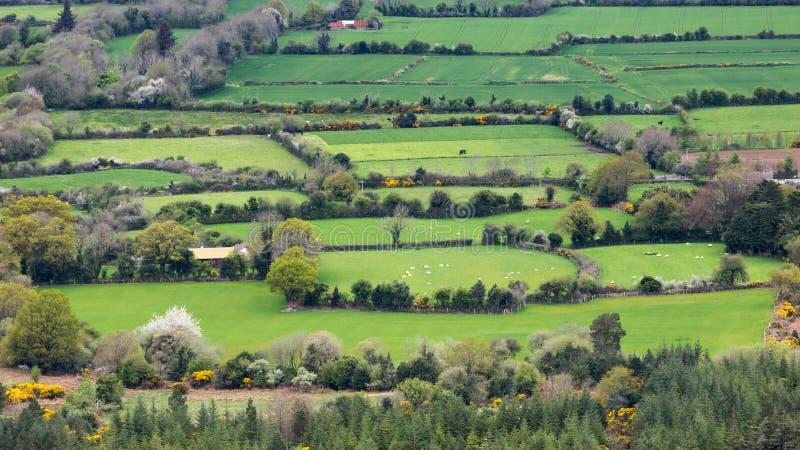 Les pâturages interminables verts de la campagne de l'Irlande image libre de droits