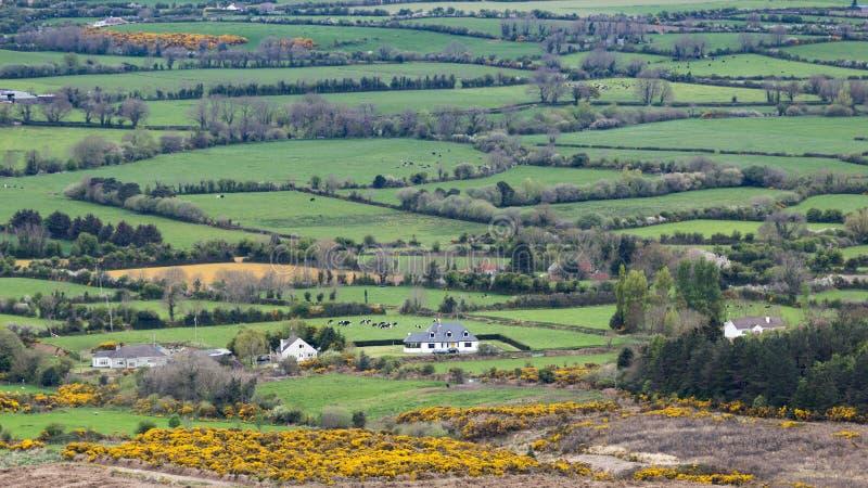 Les pâturages interminables verts de la campagne de l'Irlande photos stock