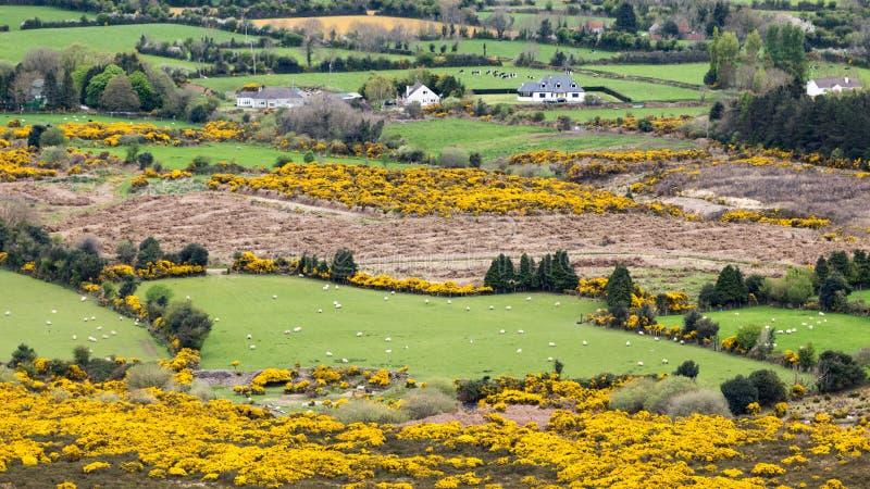 Les pâturages interminables verts de la campagne de l'Irlande photos libres de droits