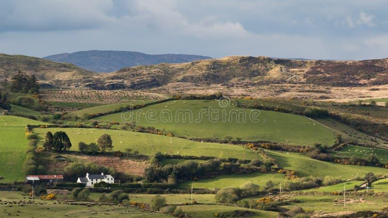 Les pâturages interminables verts de la campagne de l'Irlande images stock