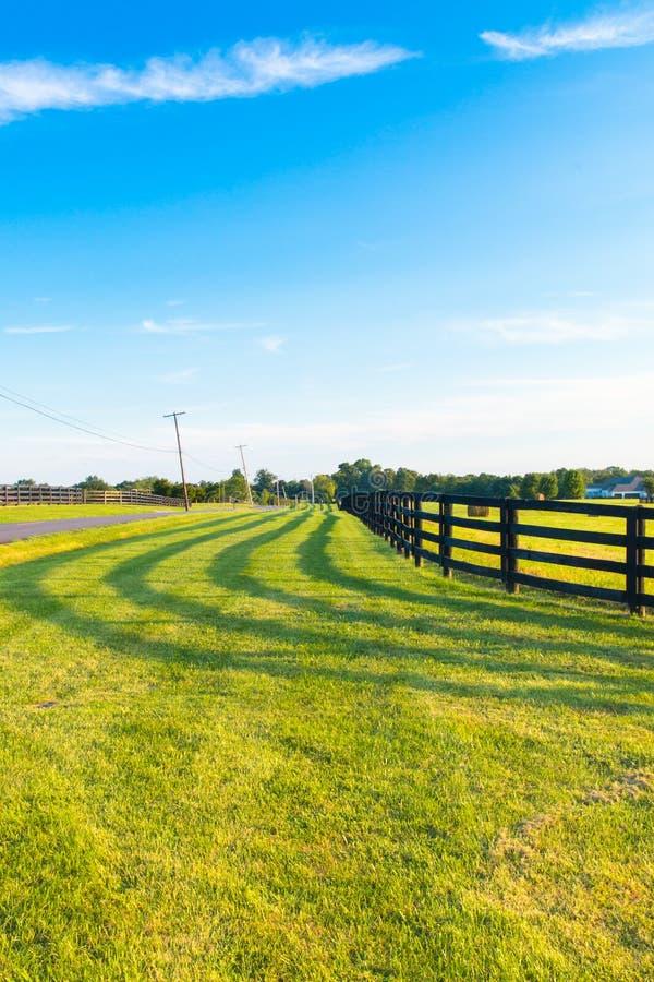 Les pâturages verts du cheval cultive avec la ligne et l'ombre de barrière le long d'a photographie stock libre de droits