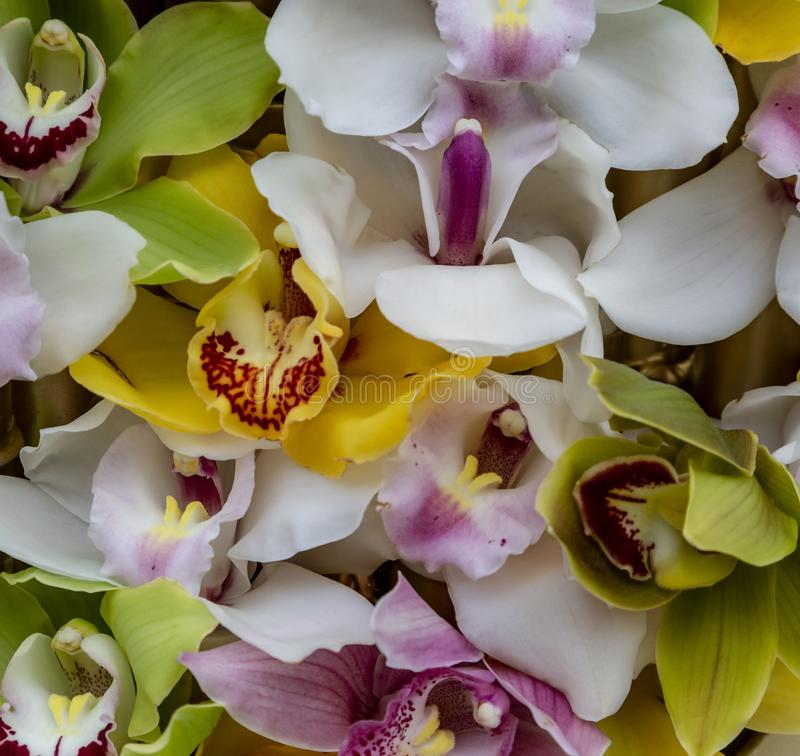 Les pétales d'orchidées modèlent images stock